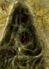 Hastur II - Detail