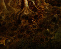 Dunwich Horror - Detail